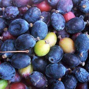 kilmora-fruit